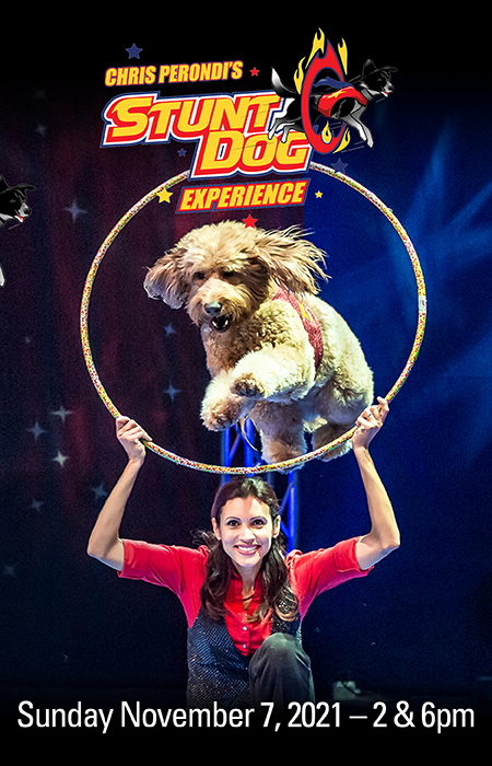 Stunt Dog Experience